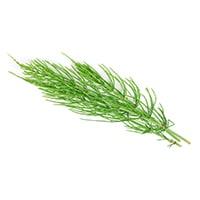Травы хвоща полевого